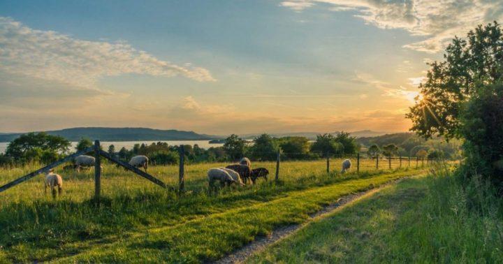 buying-a-farm-sheep-pasture-e1519622079703-1024x538